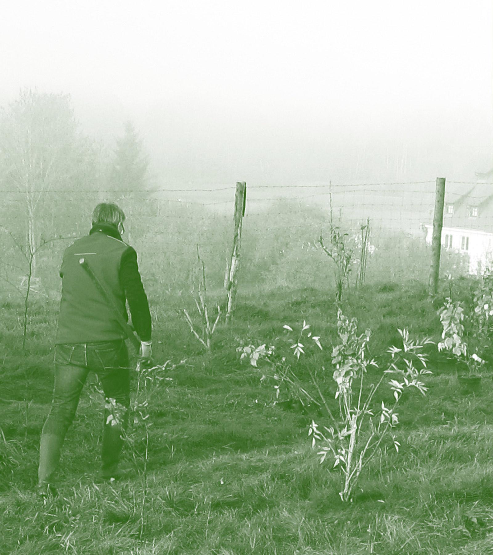 Anlage einer Feldhecke auf Wiesengrünland